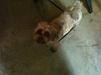 Click image for larger version.  Name:shop dog.jpg Views:61 Size:76.3 KB ID:84477
